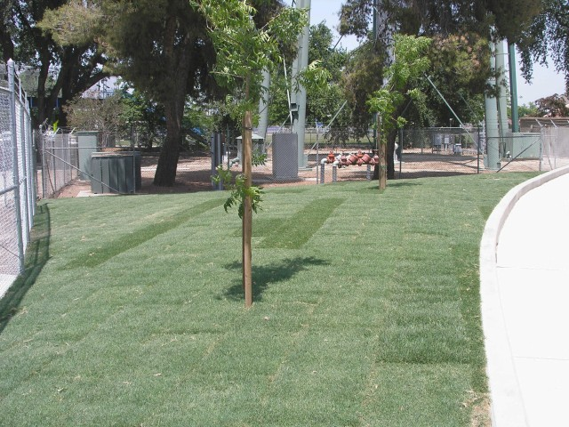 MK Bowl West End Landscaping IV-04.jpg
