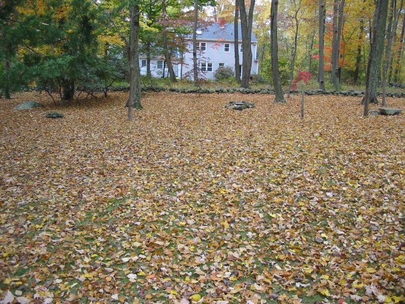 molly fall 2010 002.jpg