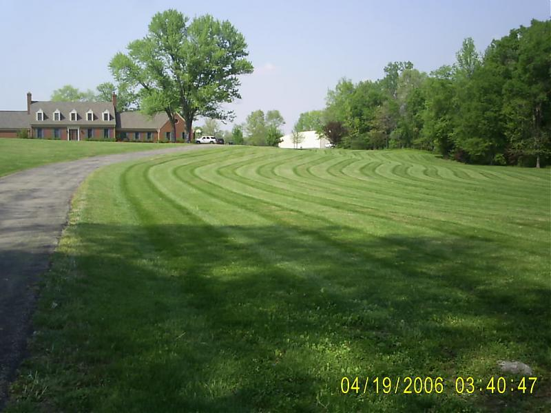 morlan's yard look at the stripes.jpg