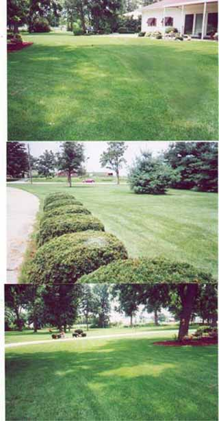 mowed lawn - 504 wapello.jpg