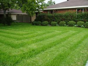 Mowing_stripes_4-thumb.jpg