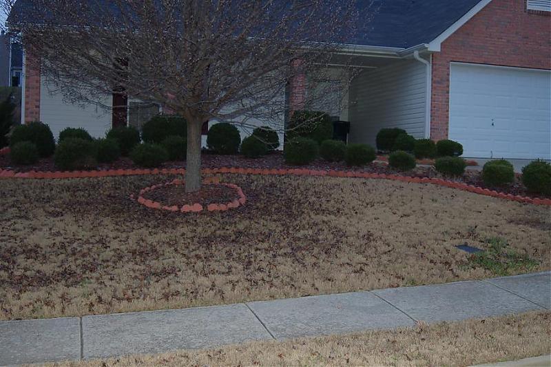 Mrs Webster's Lawn2.jpg