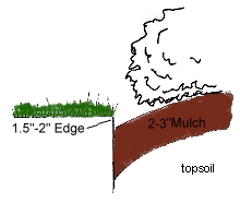 Mulched bed edge...jpg