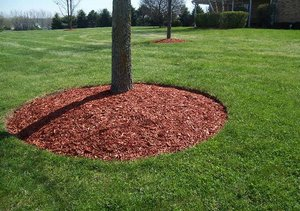 mulched tree ring.jpg