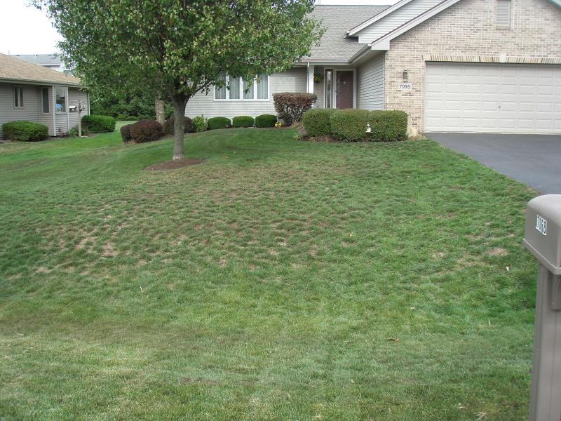 P2. Spread Grass Seed and Organic Compost throught out yard (small).jpg