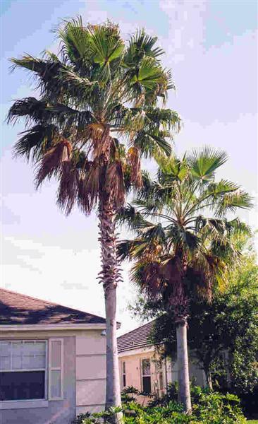 palm2 (Medium).jpg