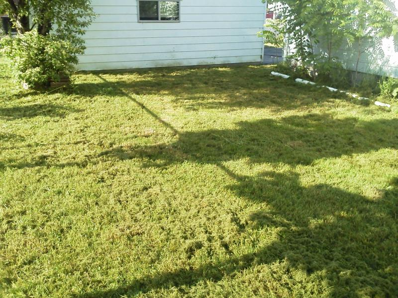 Penora Over Grown Lawn 3 online.jpg