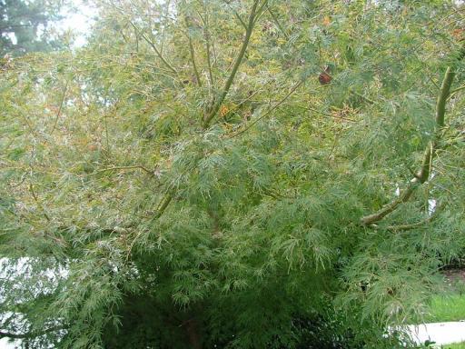 plant 3 again.jpg