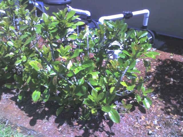 plants and kids 4-30 012.jpg