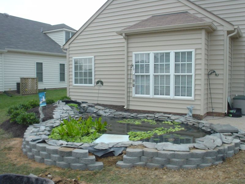 pond almost done.jpg