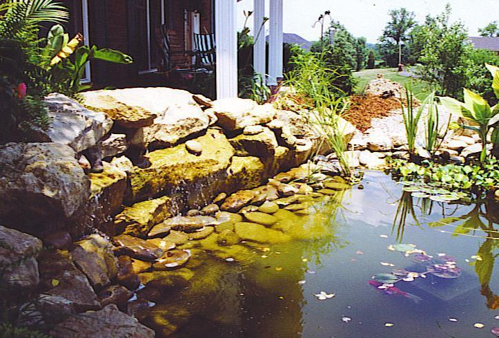 pond pic 4_edited.jpg