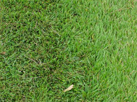 primo lawn close.jpg