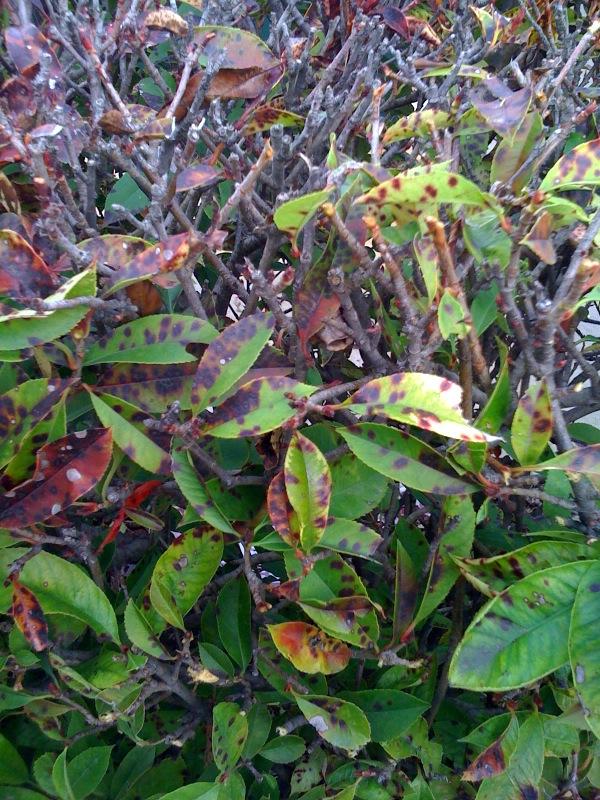 shrub 3.jpg