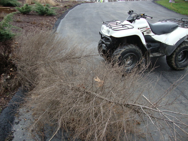 studio atv pulled bushes.JPG