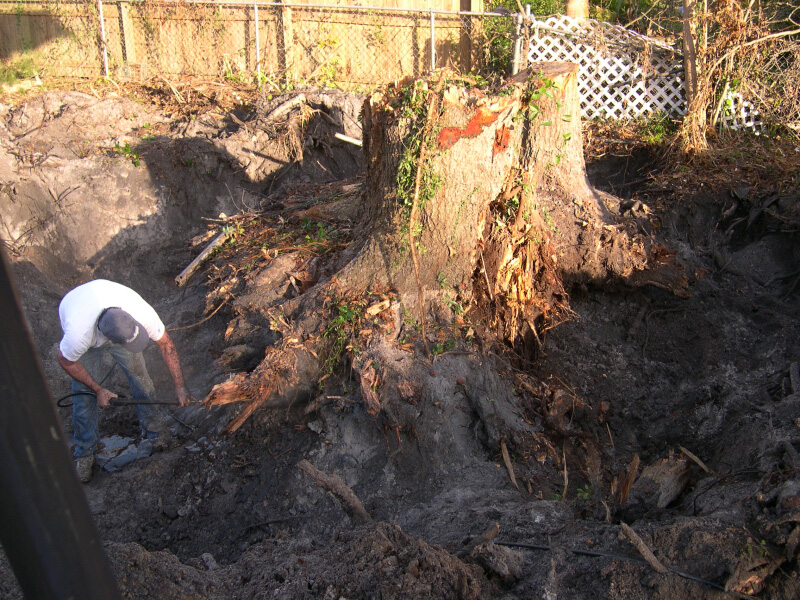 Stump closeup small.jpg