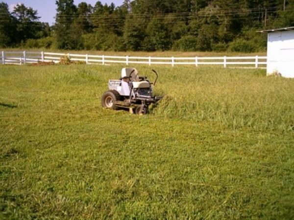 tall grass 2.JPG