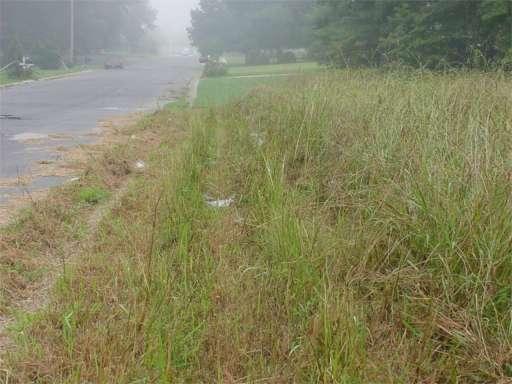 tall grass 5.jpg