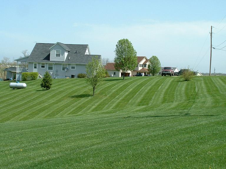 Taylor lawn.JPG