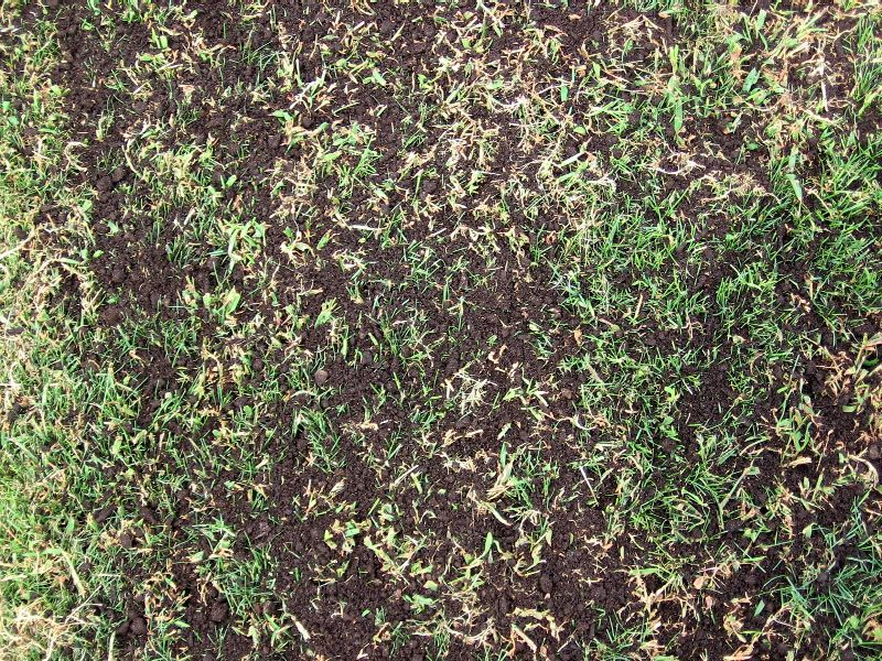 topdressed typical area closeup_low res.JPG