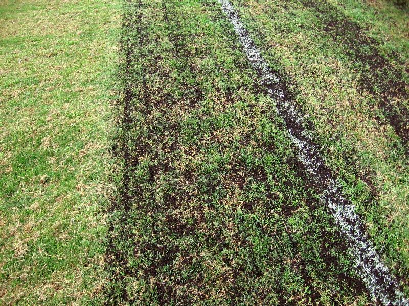 topdressing closeup early passes_low res.JPG