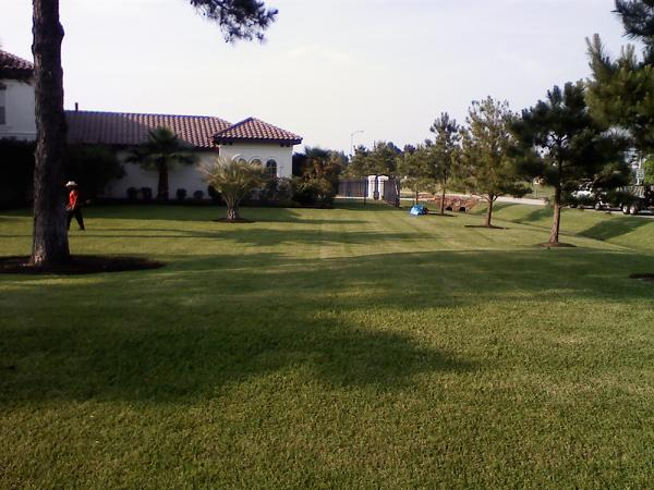tracy marks lawn pic 2.jpg