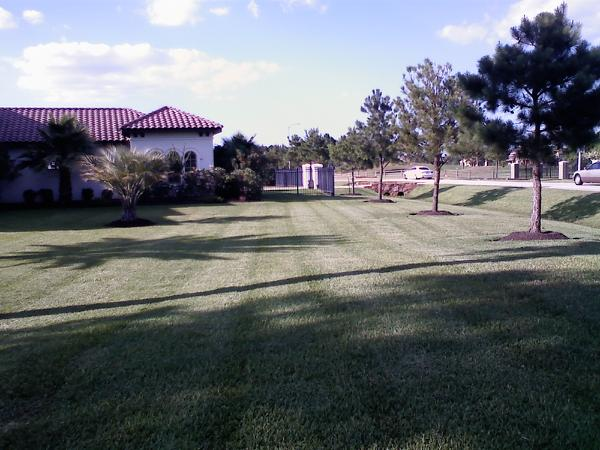 Tracy Marks Lawn Pic 4.jpg