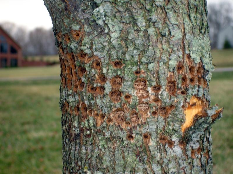 tree 1 (3).jpg
