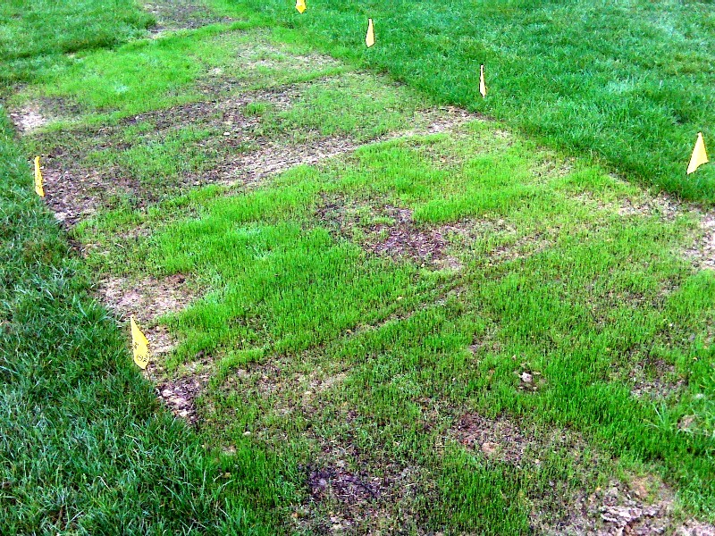 UMS plot all taken from west Sept 27_low res.jpg