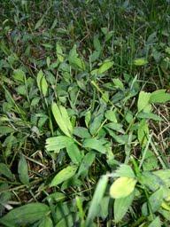 weed 2.jpg