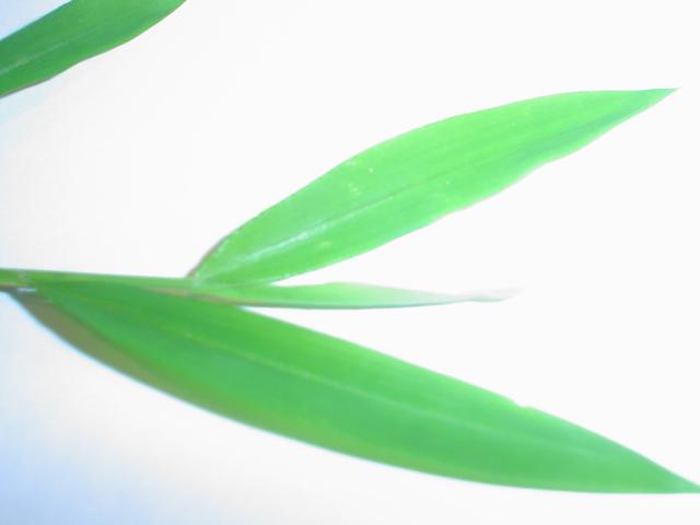 weed 3.jpg