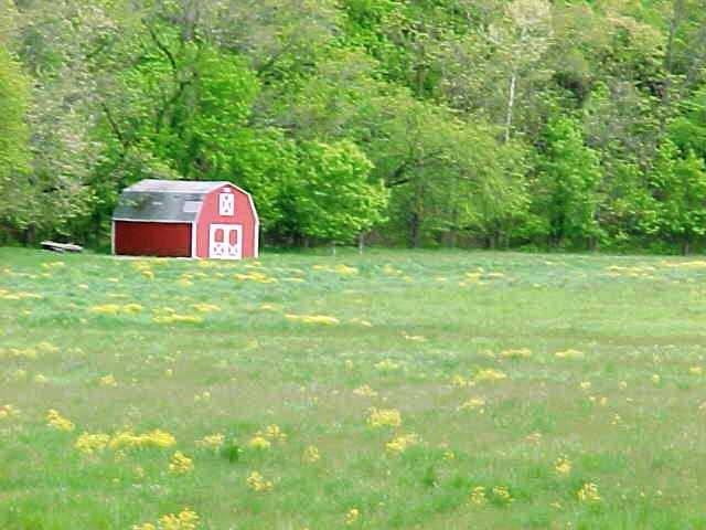 Wildwood MO Spring Glade.JPG