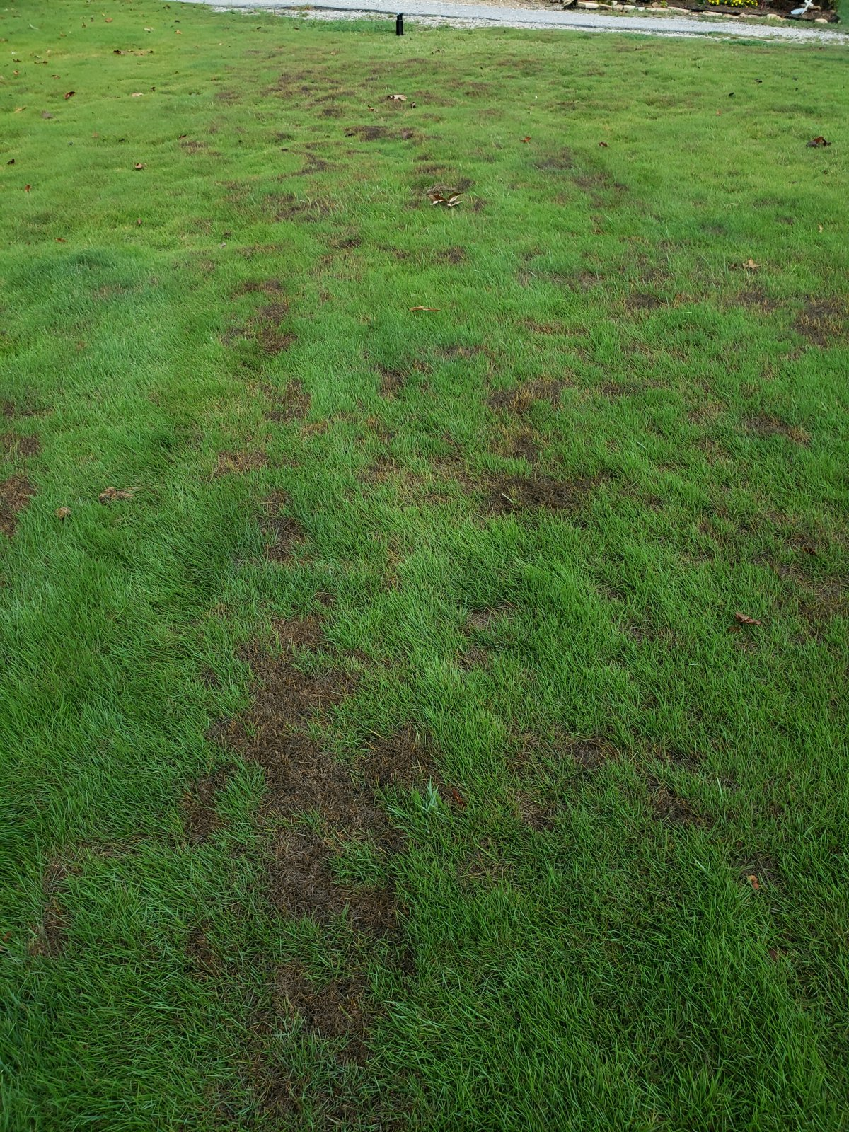 ZOYSIA GRASS PROBLEMS 08. 2019  20190812_073706 (002).jpg