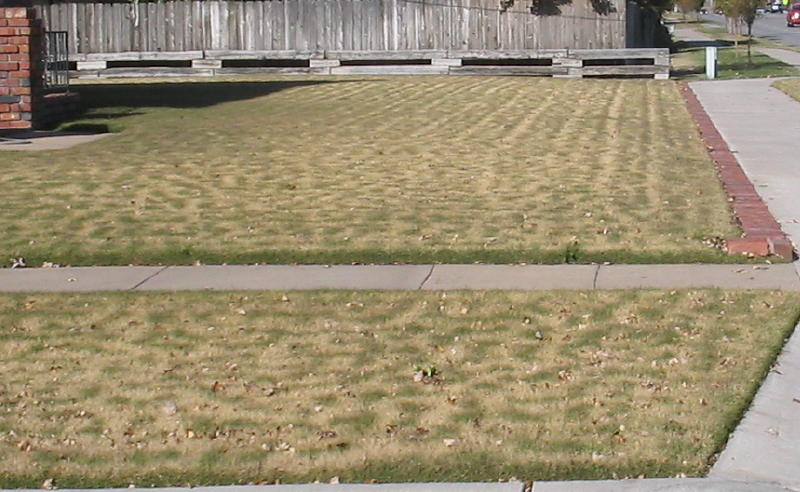 Zoysia with squiggly green spots.JPG
